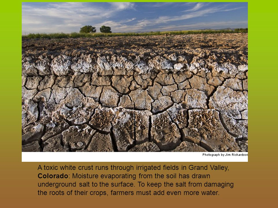 A toxic white crust runs through irrigated fields in Grand Valley, Colorado: Moisture evaporating from the soil has drawn underground salt to the surface.