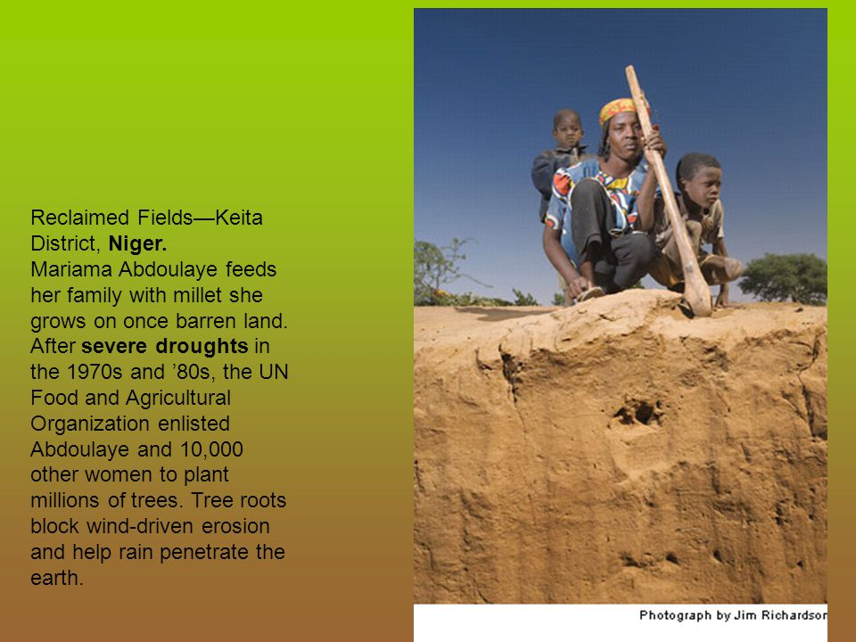 Reclaimed Fields—Keita District, Niger.
