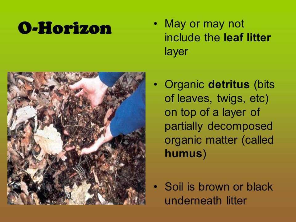 O-Horizon May or may not include the leaf litter layer