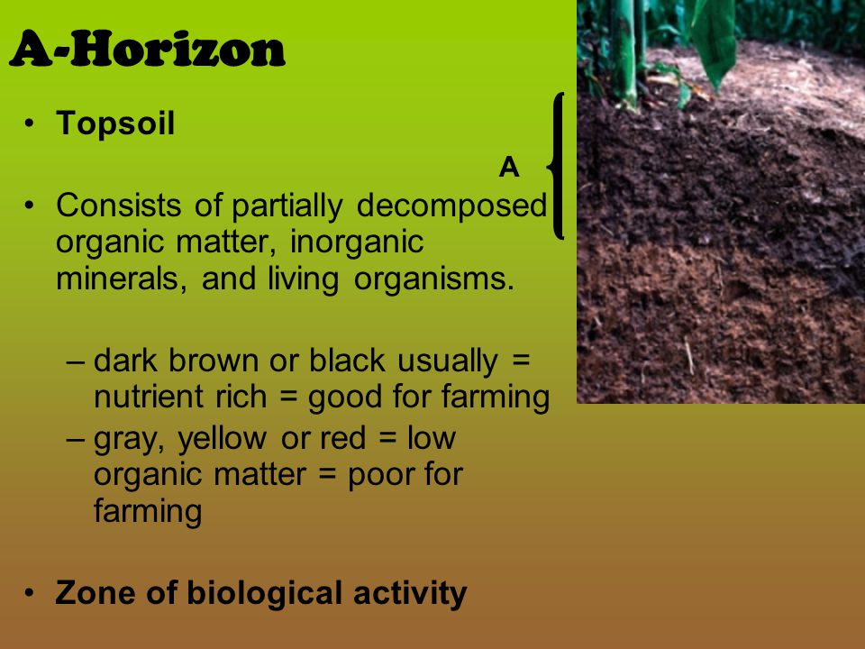 Soils ppt video online download for What is rich soil called