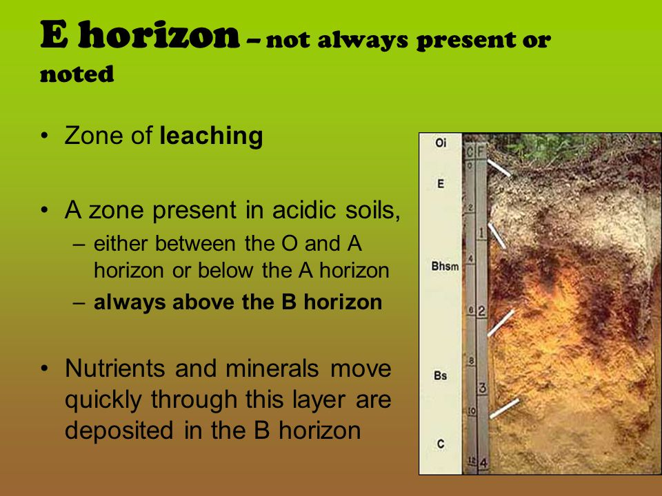 E horizon – not always present or noted