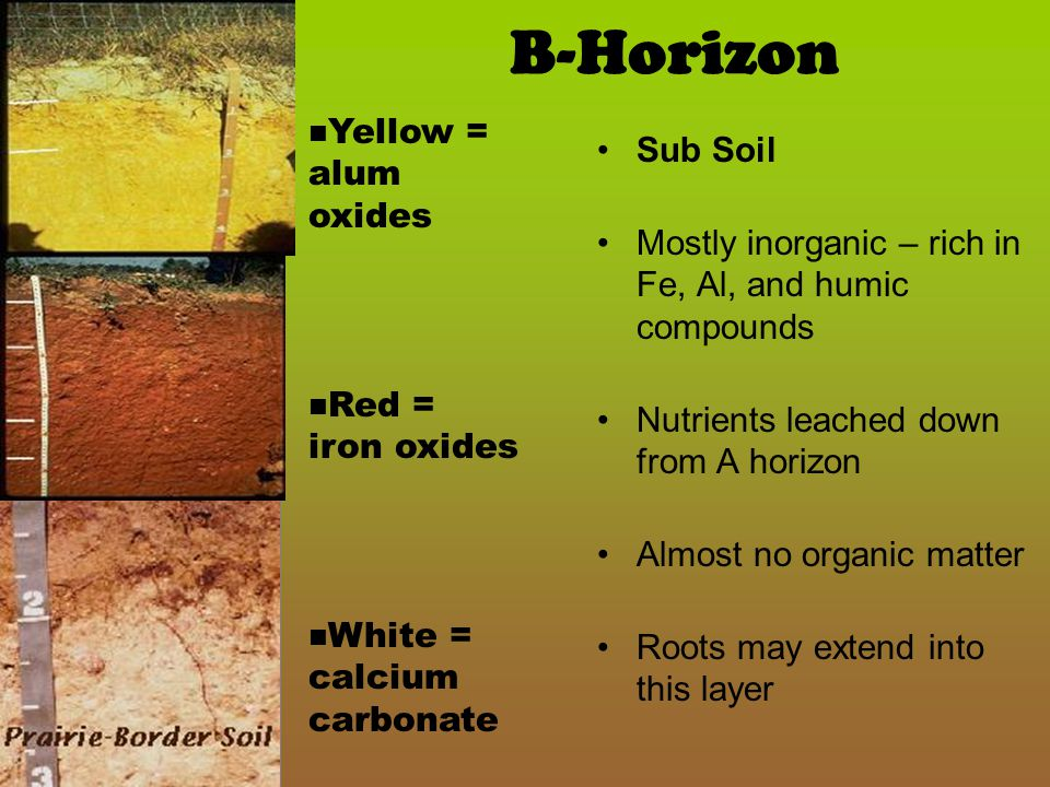 B-Horizon Yellow = alum oxides Sub Soil