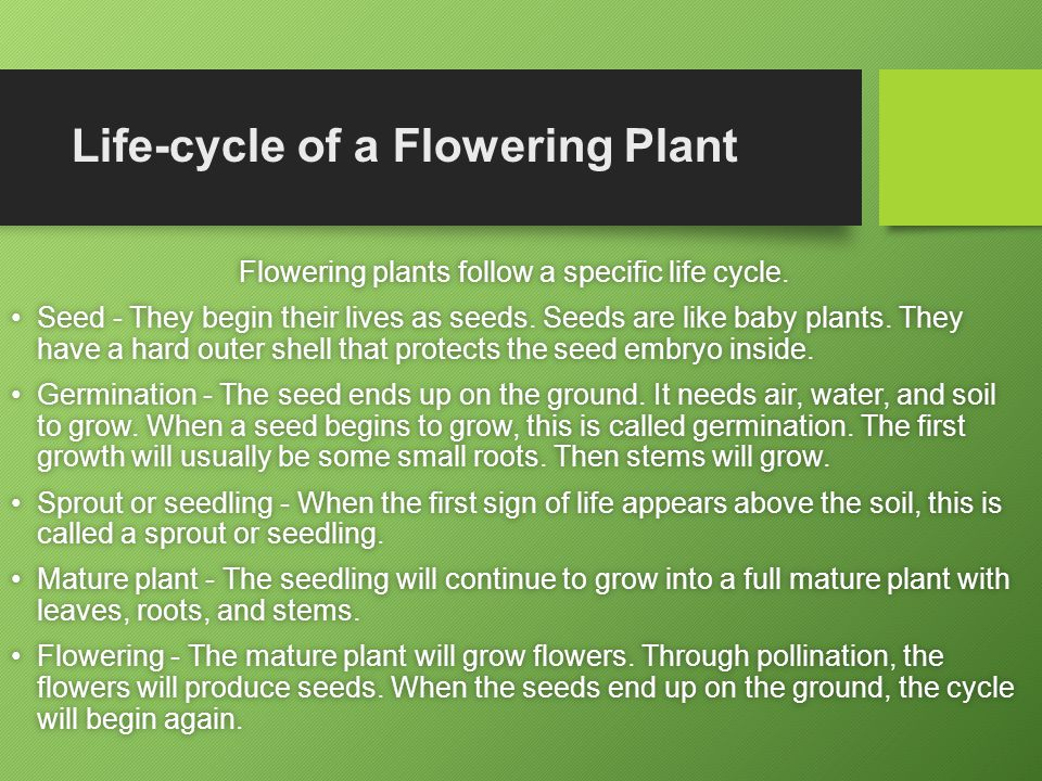 Life-cycle of a Flowering Plant