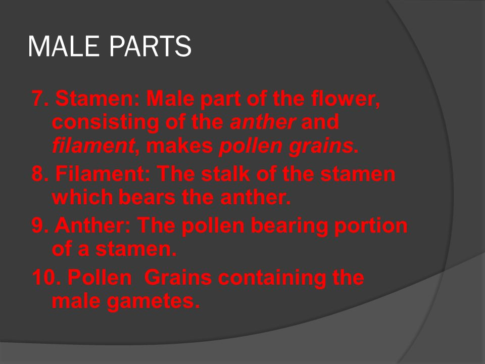 MALE PARTS 7. Stamen: Male part of the flower, consisting of the anther and filament, makes pollen grains.
