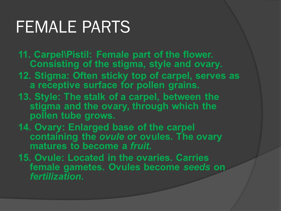 FEMALE PARTS 11. Carpel\Pistil: Female part of the flower. Consisting of the stigma, style and ovary.