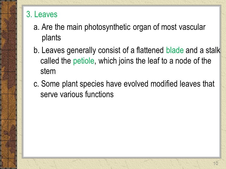3. Leaves a. Are the main photosynthetic organ of most vascular plants b.