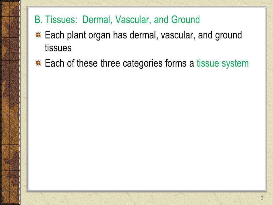 B. Tissues: Dermal, Vascular, and Ground