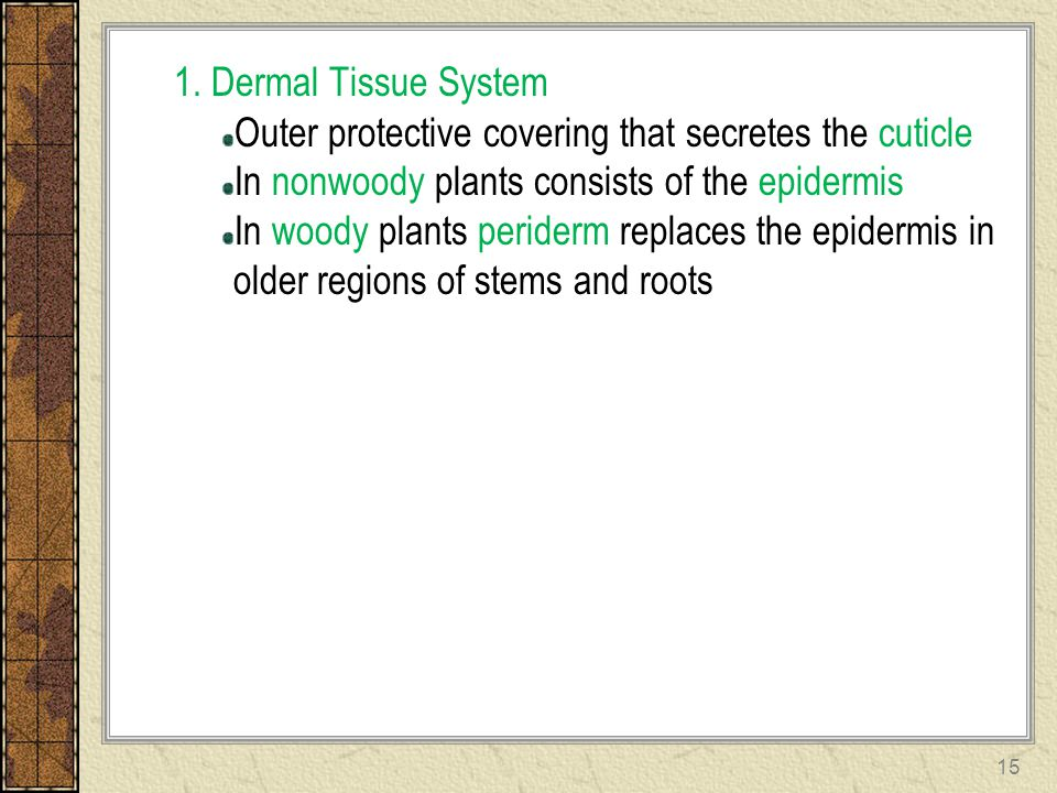 1. Dermal Tissue System Outer protective covering that secretes the cuticle. In nonwoody plants consists of the epidermis.