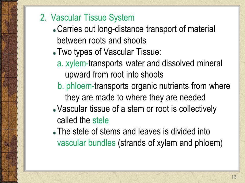 2. Vascular Tissue System