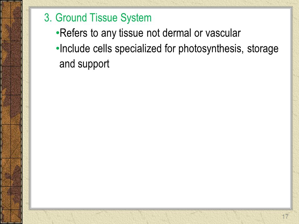 Ground Tissue System Refers to any tissue not dermal or vascular. Include cells specialized for photosynthesis, storage.
