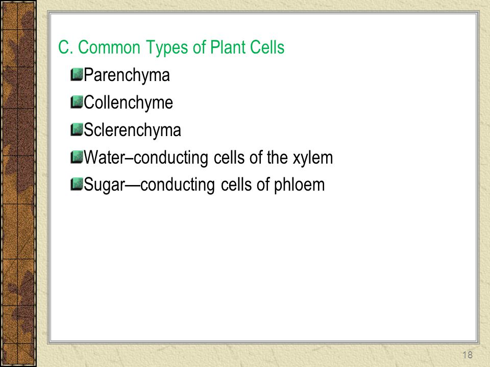 C. Common Types of Plant Cells