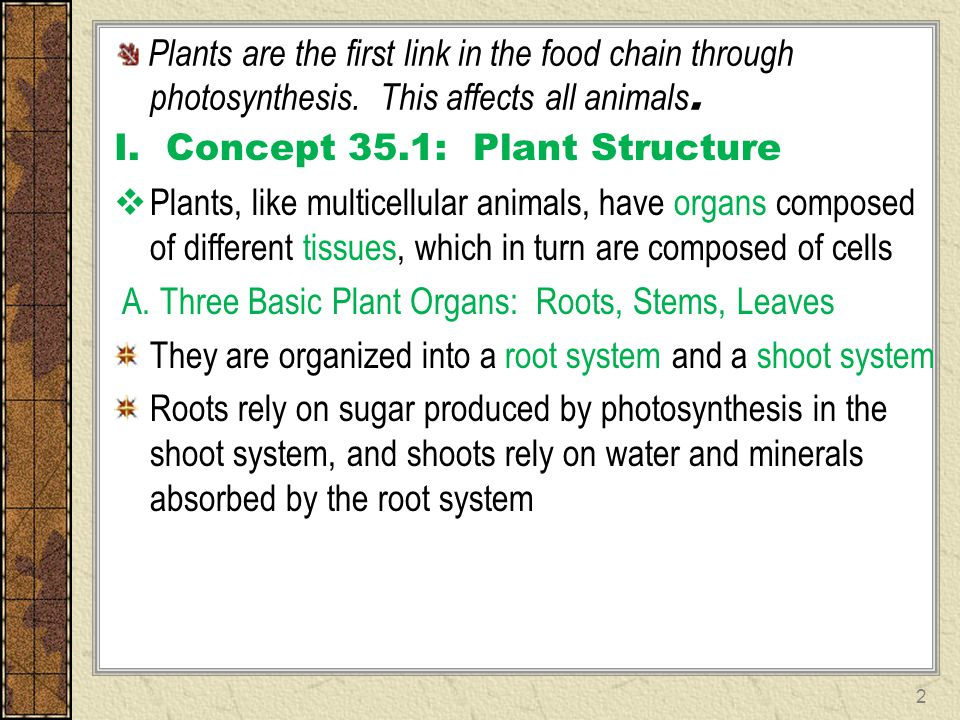 Plants are the first link in the food chain through. photosynthesis