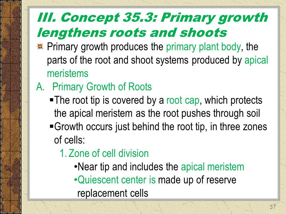 III. Concept 35.3: Primary growth lengthens roots and shoots