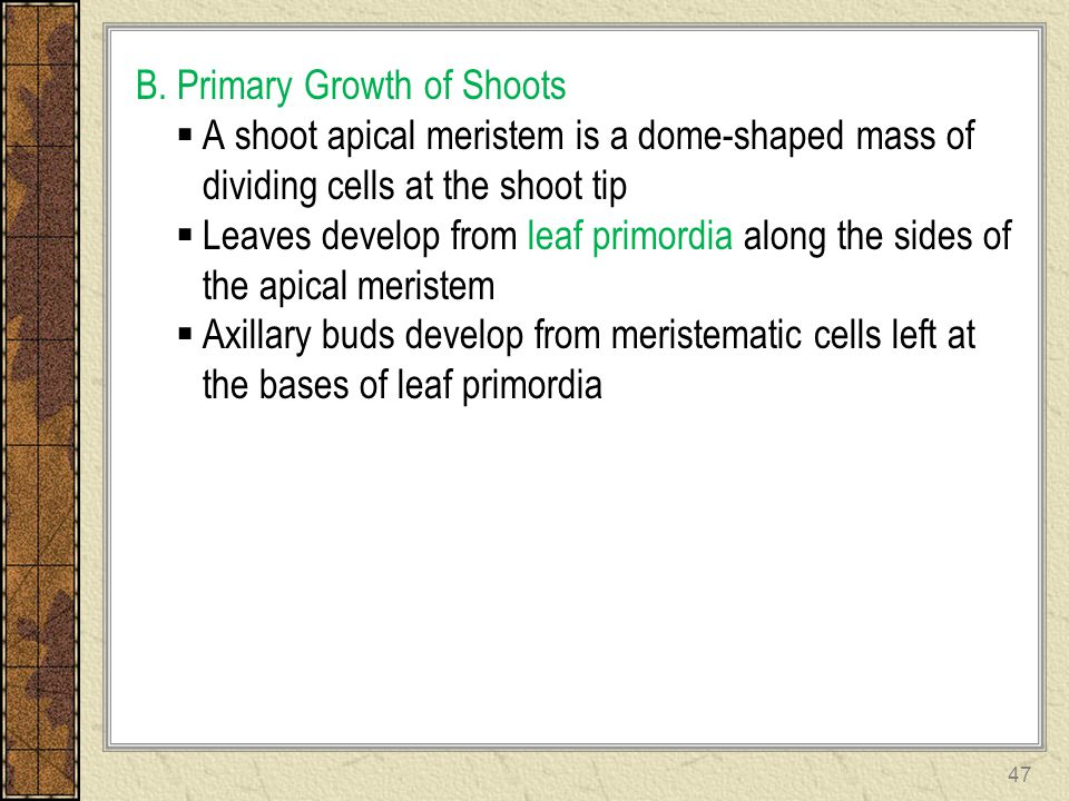 B. Primary Growth of Shoots