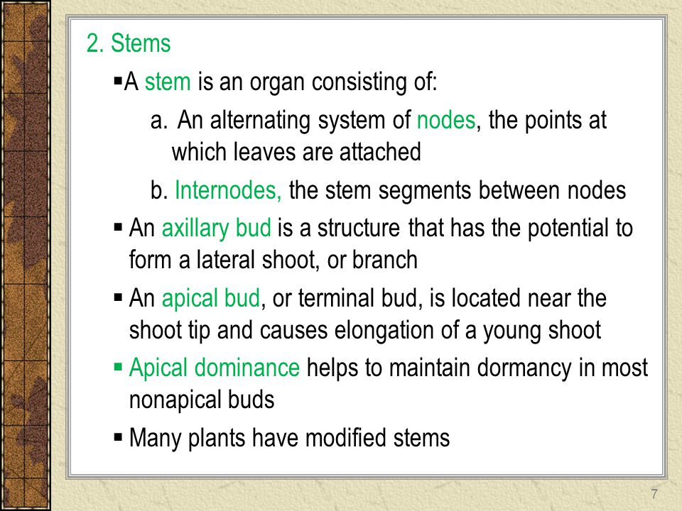 2. Stems A stem is an organ consisting of: An alternating system of nodes, the points at which leaves are attached.