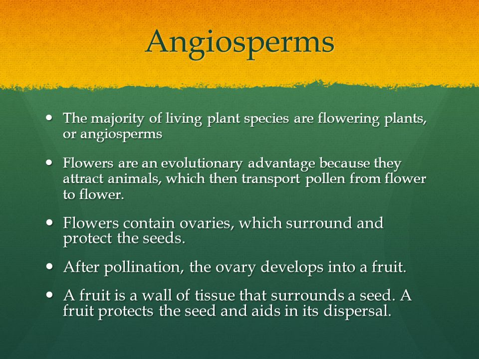 Angiosperms The majority of living plant species are flowering plants, or angiosperms.