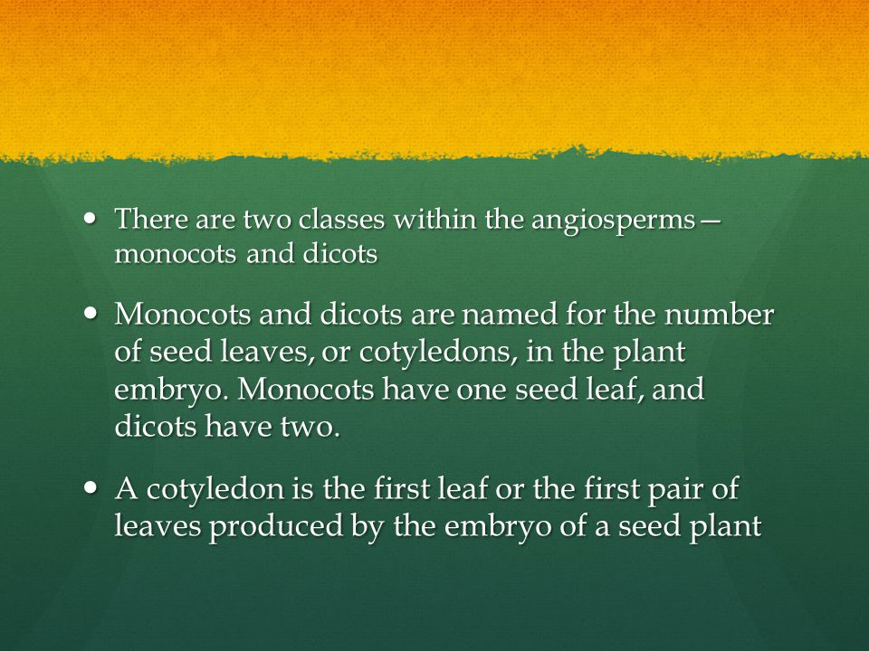 There are two classes within the angiosperms— monocots and dicots