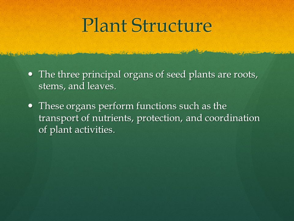 Plant Structure The three principal organs of seed plants are roots, stems, and leaves.