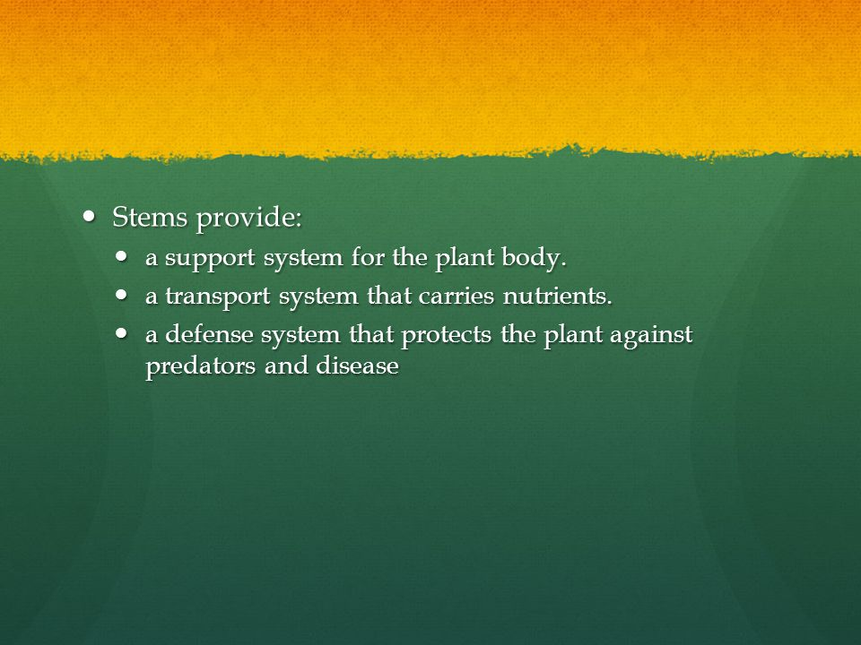 Stems provide: a support system for the plant body.