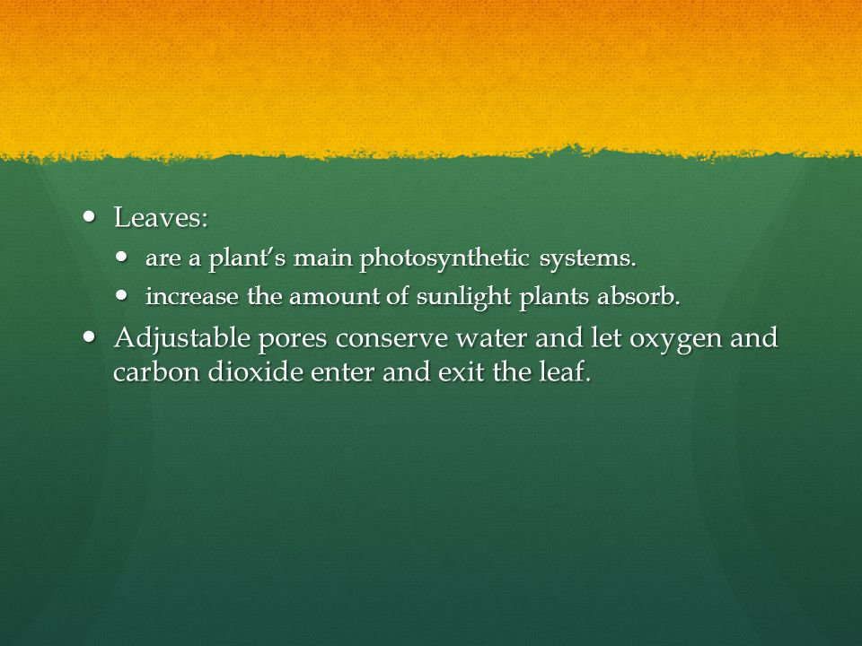 Leaves: are a plant's main photosynthetic systems. increase the amount of sunlight plants absorb.