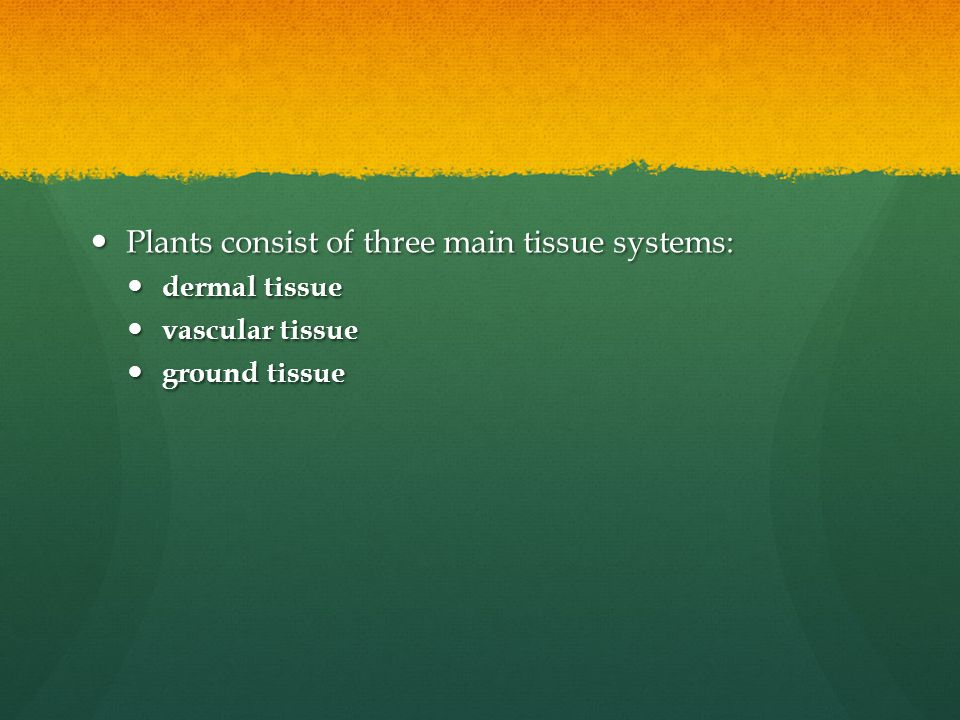 Plants consist of three main tissue systems: