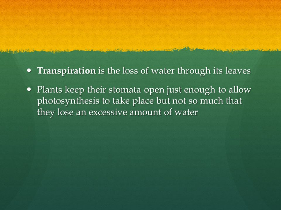Transpiration is the loss of water through its leaves