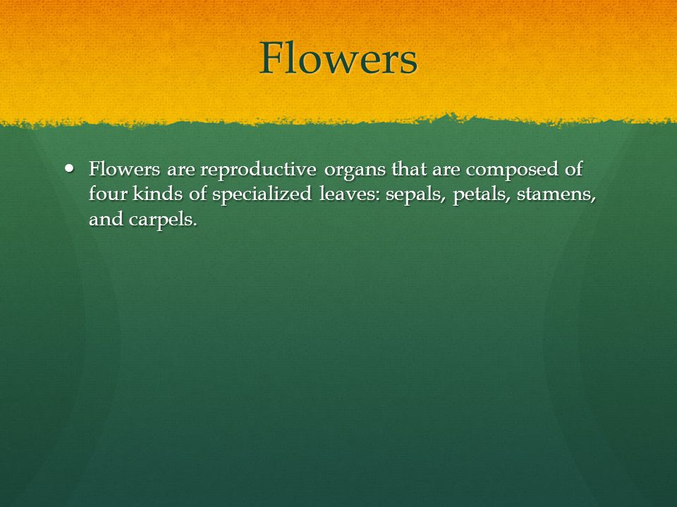 Flowers Flowers are reproductive organs that are composed of four kinds of specialized leaves: sepals, petals, stamens, and carpels.