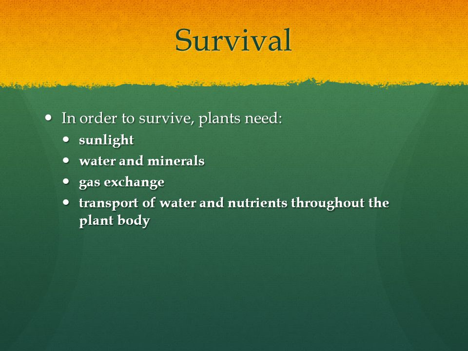 Survival In order to survive, plants need: sunlight water and minerals