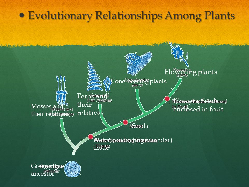 Evolutionary Relationships Among Plants
