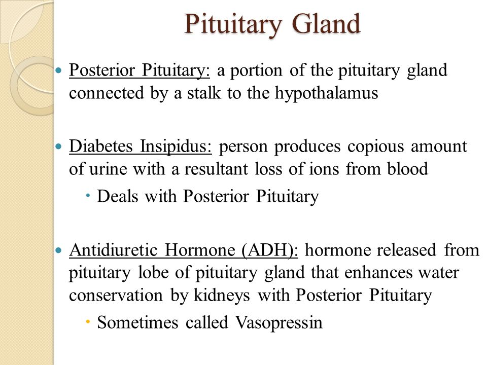 Pituitary Gland Posterior Pituitary: a portion of the pituitary gland connected by a stalk to the hypothalamus.