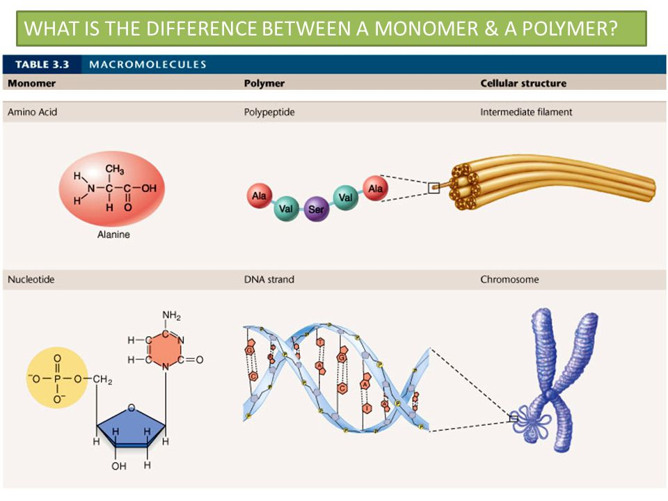 explain the relationship between a monomer and polymer