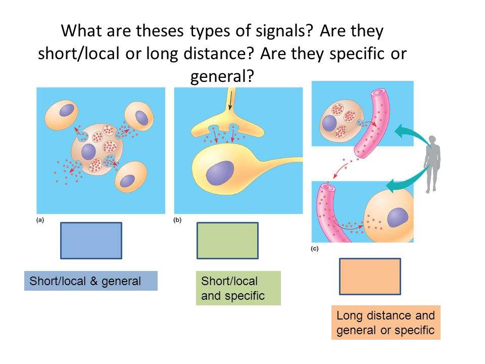 What are theses types of signals Are they short/local or long distance Are they specific or general