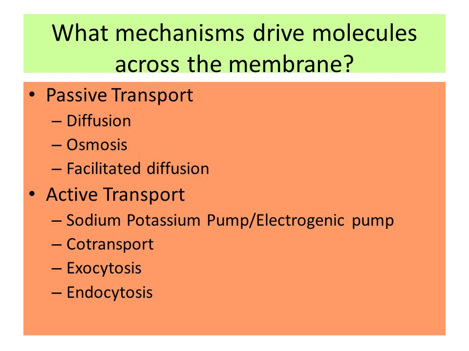 What mechanisms drive molecules across the membrane