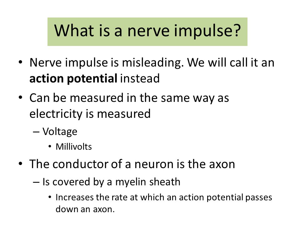 What is a nerve impulse Nerve impulse is misleading. We will call it an action potential instead.