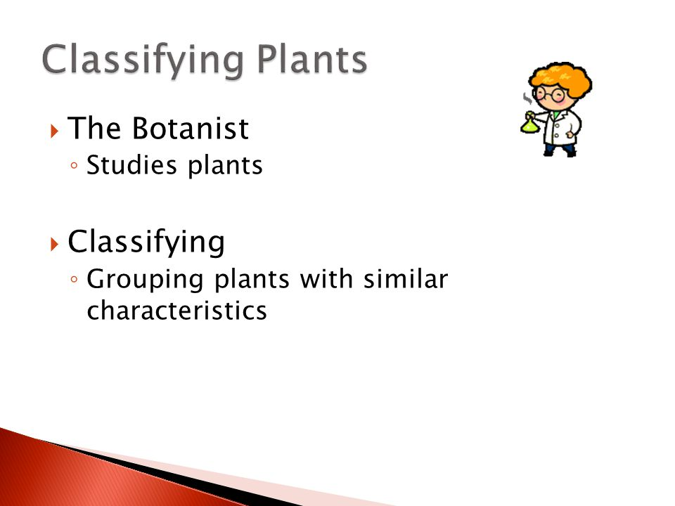 Classifying Plants The Botanist Classifying Studies plants