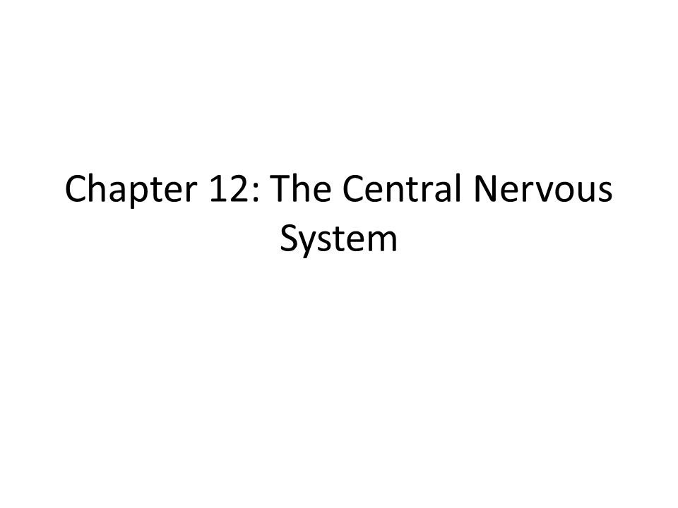 Chapter 12: The Central Nervous System