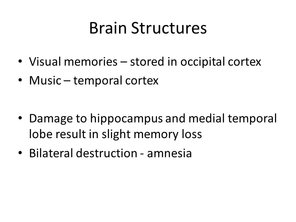 Brain Structures Visual memories – stored in occipital cortex