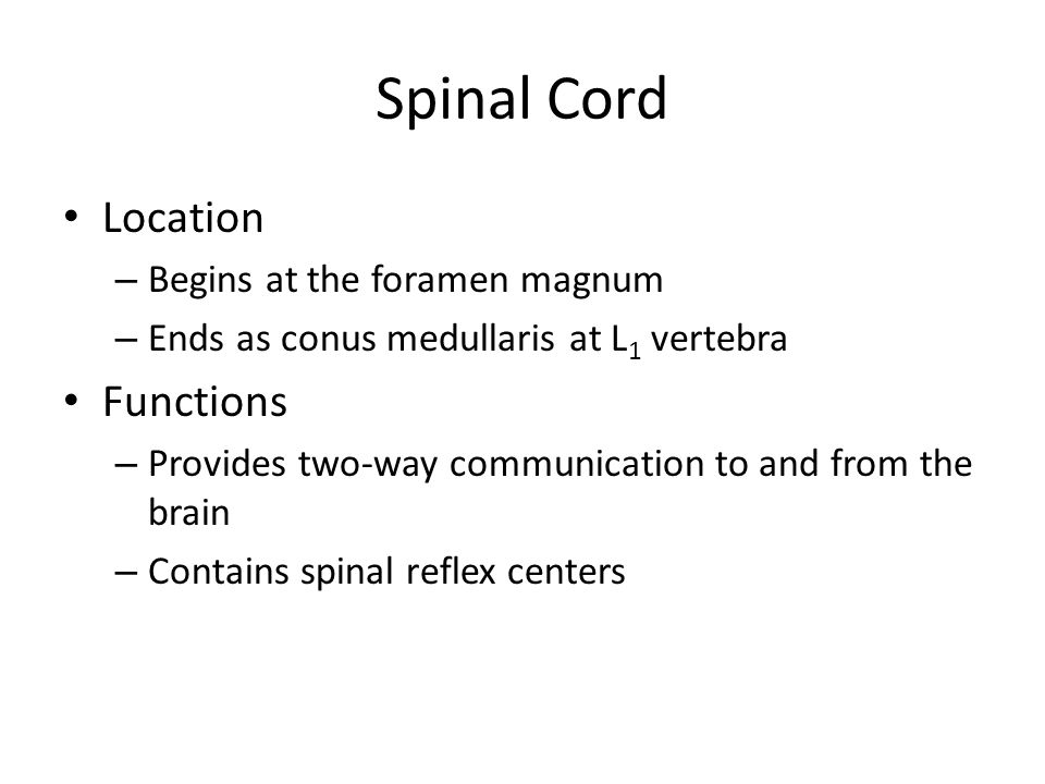 Spinal Cord Location Functions Begins at the foramen magnum