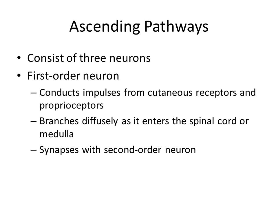 Ascending Pathways Consist of three neurons First-order neuron