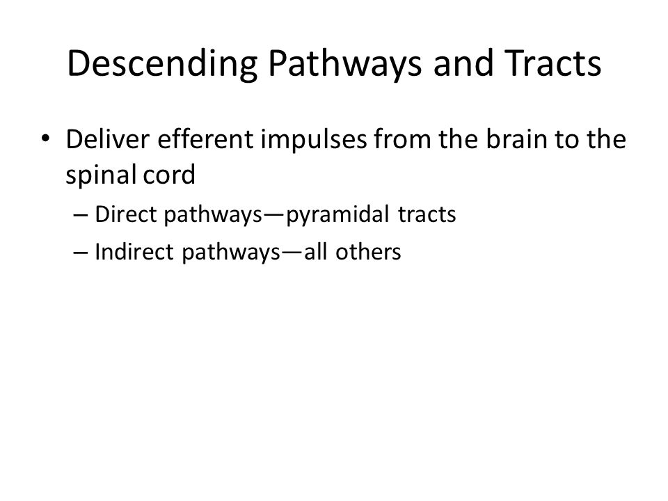 Descending Pathways and Tracts