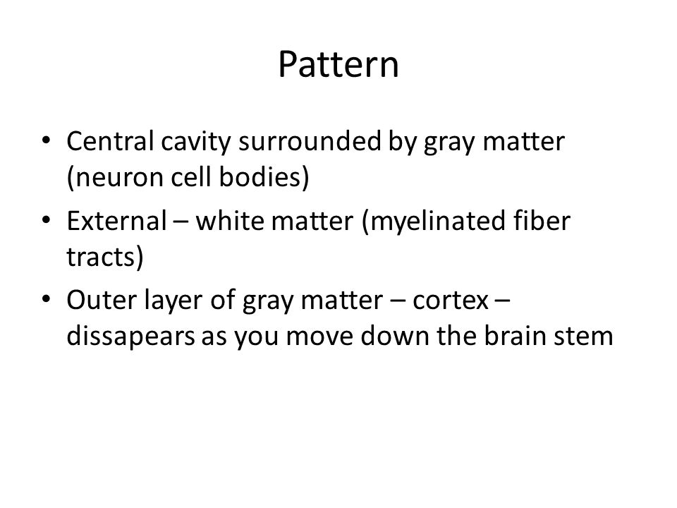 Pattern Central cavity surrounded by gray matter (neuron cell bodies)