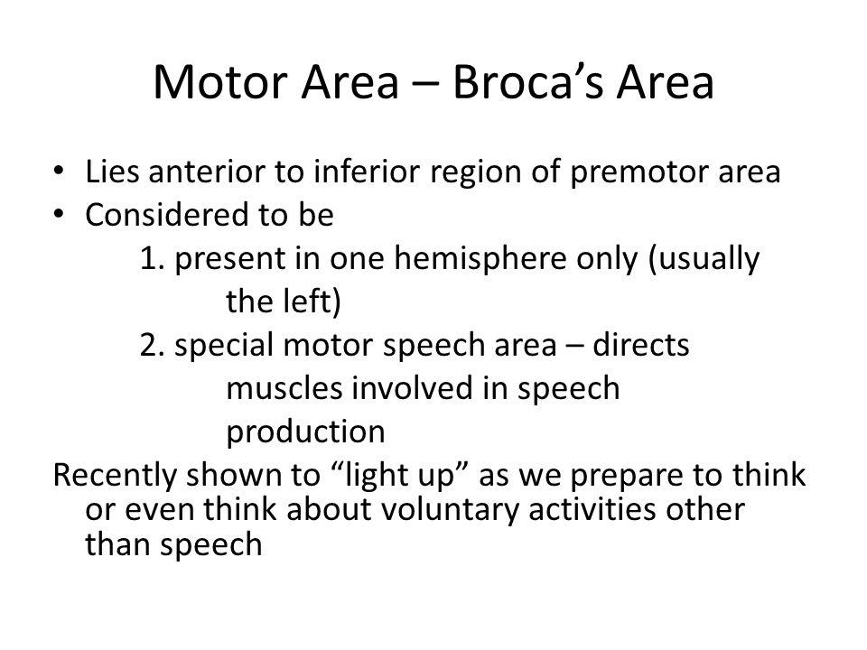 Motor Area – Broca's Area