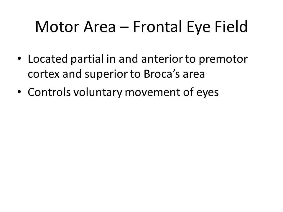 Motor Area – Frontal Eye Field