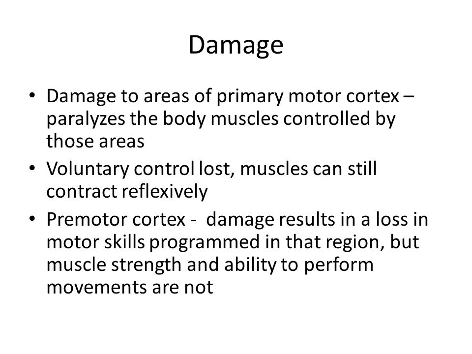 Damage Damage to areas of primary motor cortex – paralyzes the body muscles controlled by those areas.