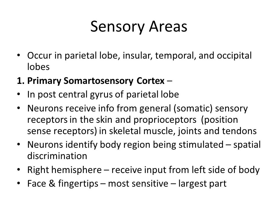 Sensory Areas Occur in parietal lobe, insular, temporal, and occipital lobes. 1. Primary Somartosensory Cortex –