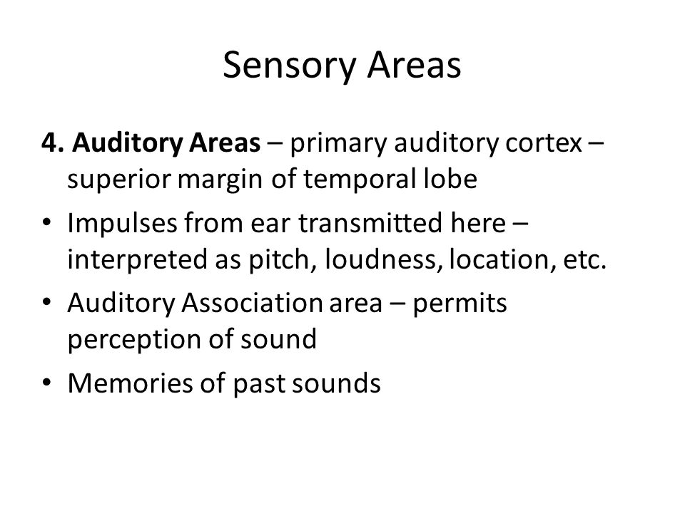 Sensory Areas 4. Auditory Areas – primary auditory cortex – superior margin of temporal lobe.