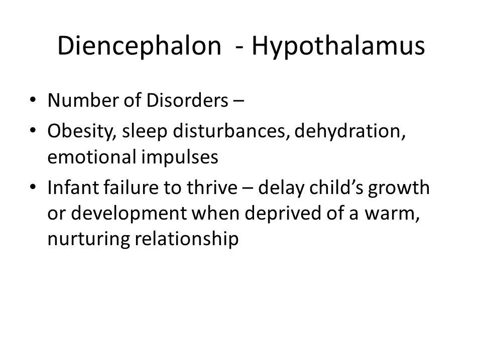 Diencephalon - Hypothalamus