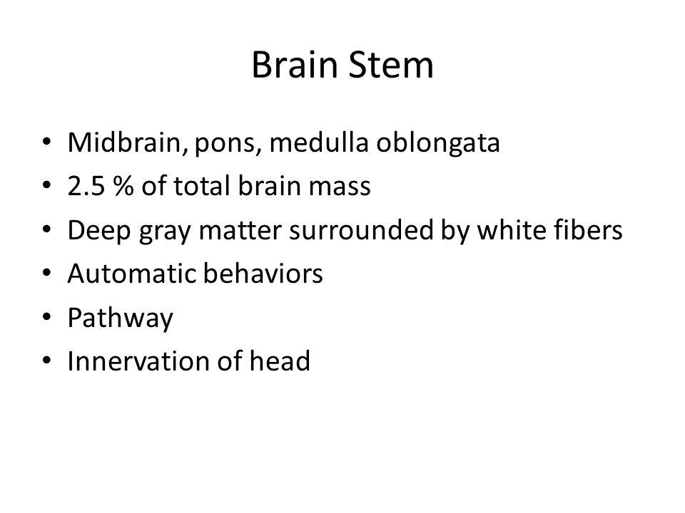 Brain Stem Midbrain, pons, medulla oblongata 2.5 % of total brain mass