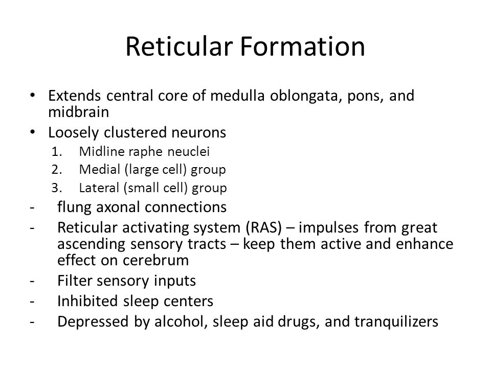 Reticular Formation Extends central core of medulla oblongata, pons, and midbrain. Loosely clustered neurons.
