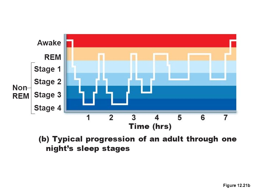 (b) Typical progression of an adult through one night's sleep stages